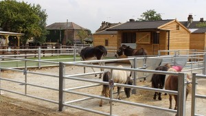 Brooks-Farm-Homepage3